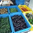 今週は台風15号が直撃。被災地も暴風雨でした。 野菜は、まだ夏野菜のキュウリやナスなどを持って行きました。また、ジャガイモも収穫出来ましたので、持って行ってます。