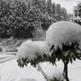 遅れていた雪が、本格的に降り始めました。今日は早朝から間断なく振り続いて、ずんずん積もっています。当地では、多い日は1日に50~70cmぐらい降り積もることも多く、掌握はしているのですが、それでもおどろき「...